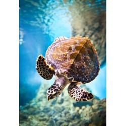 Wall Mural Marine Turtle