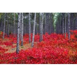 Déco murale forêt au printemps