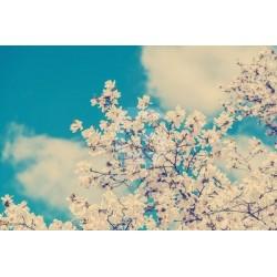Fotomural árbol con flor 1