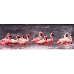 Fotomural flamencos rosados