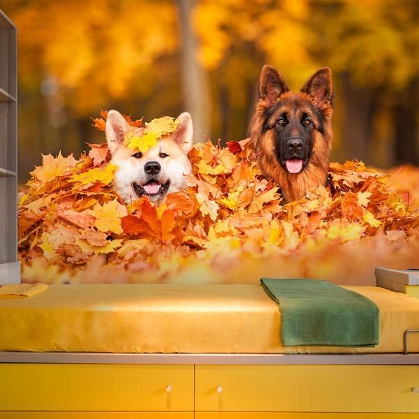 Photo murale chiens